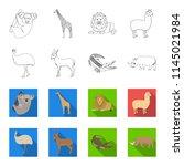lama  ostrich emu  young... | Shutterstock . vector #1145021984
