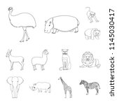 different animals outline icons ...   Shutterstock . vector #1145030417