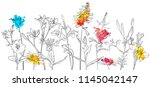 vector drawing flowers  floral... | Shutterstock .eps vector #1145042147