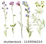 set of isolated watercolor... | Shutterstock . vector #1145046314