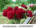 red peony herbaceous hybrid ... | Shutterstock . vector #1145058407