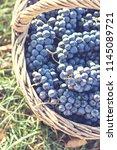 dark grapes in a basket. grape... | Shutterstock . vector #1145089721