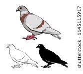 pigeon or dove stock vector...   Shutterstock .eps vector #1145115917
