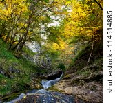river and autumn forest with... | Shutterstock . vector #114514885