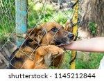 outddor homeless animal shelter.... | Shutterstock . vector #1145212844