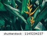 orange tropical exotic flowers... | Shutterstock . vector #1145234237