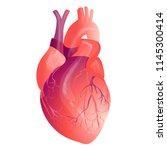 vector realistic human heart ... | Shutterstock .eps vector #1145300414