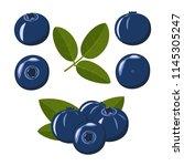 bilberry. blue berries of...   Shutterstock .eps vector #1145305247