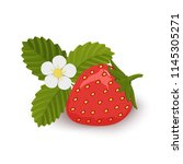 strawberries with leaves and...   Shutterstock .eps vector #1145305271