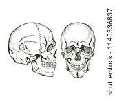 vector skull  monogram  graphic ... | Shutterstock .eps vector #1145336837