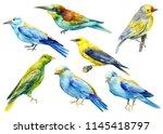 set beautiful birds on isolated ... | Shutterstock . vector #1145418797