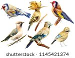 set of birds on isolated white... | Shutterstock . vector #1145421374