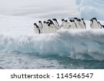 Adelie Penguins On The Iceberg...
