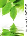 green leaves reflected in water | Shutterstock . vector #114553909