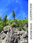 Small photo of A single pine tree standing top of every other pine tree surrounding it formed on a rocky landscape