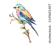 colibri bird. hand drown cute... | Shutterstock .eps vector #1145601407