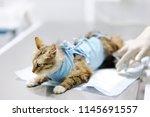 female veterinary doctor giving ...   Shutterstock . vector #1145691557