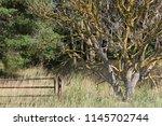 old rusty metal gate beside... | Shutterstock . vector #1145702744