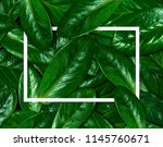 texture of green leaf.... | Shutterstock . vector #1145760671