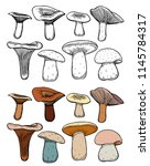 set of forest mushrooms   hand... | Shutterstock .eps vector #1145784317