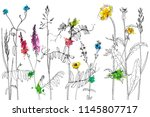 vector background with line... | Shutterstock .eps vector #1145807717