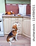 kitchen pilferers. now we know... | Shutterstock . vector #114584311