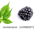 one blackberry and leaves | Shutterstock . vector #1145883971