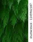 textured green leaf background... | Shutterstock . vector #1145962187