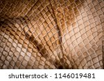 snake skin   texture close up... | Shutterstock . vector #1146019481