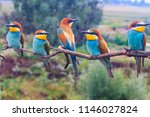 family of exotic birds european ... | Shutterstock . vector #1146027824