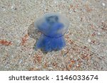 Blue Jellyfish In The Sea