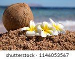 beautiful white plumeria flower ... | Shutterstock . vector #1146053567