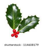 holly leaves and berries... | Shutterstock . vector #114608179