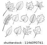 autum leave hand drawing  | Shutterstock .eps vector #1146090761