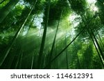 The Flourish Bamboo Forest Wit...