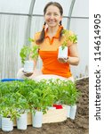 woman with tomato seedlings in pots  at hothouse - stock photo