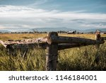wyoming plains at mormon row in ... | Shutterstock . vector #1146184001