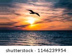 Sunset seagull silhouette on...