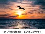 Seagull Bird Flight Sunset...