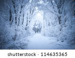 Road Through Frozen Forest Wit...