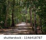 Ancient Path Through The...