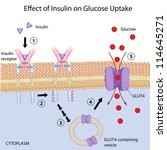 Effect of Insulin on glucose uptake - stock photo