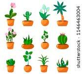cartoon green house plants in... | Shutterstock .eps vector #1146463004
