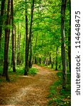 Path In Beautiful Beech Forest...