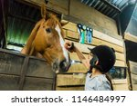 girl brushing a horse in a... | Shutterstock . vector #1146484997