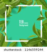 green tea leaves manu and... | Shutterstock .eps vector #1146559244
