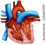 illustration of a human heart... | Shutterstock .eps vector #114662395