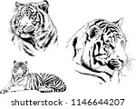 vector drawings sketches... | Shutterstock .eps vector #1146644207