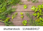 dill and parsley leaves on... | Shutterstock . vector #1146683417