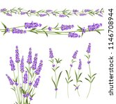 set of lavender flowers... | Shutterstock .eps vector #1146708944